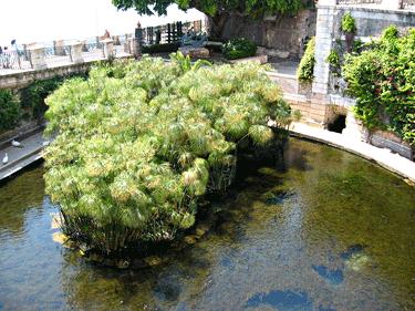 Arethusa-fountain