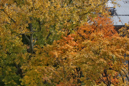 Fall colors next to Stamford High, October 23